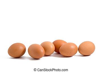 Sechs Eier hintereinander auf weißem Hintergrund.