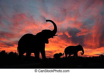silhouette, sonnenuntergang, elefanten