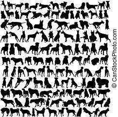 silhouetten, hund, hunderte
