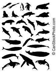 silhouetten, vektor, mammals., meer, abbildung