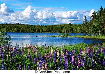 Skandinavische Sommerlandschaft