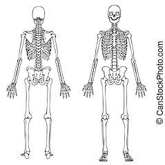 Skeleton vor und zurück