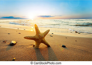 sommer, sandstrand, sonnig, seestern