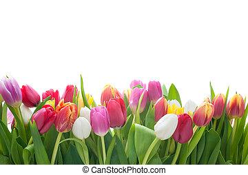 Spring Tulpen.