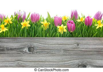 Spring Tulpen und Narzissenblumen.