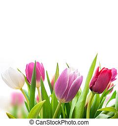 Spring Tulpenblumen.