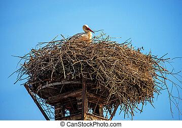 Storch in einem Nest auf einem Dach.
