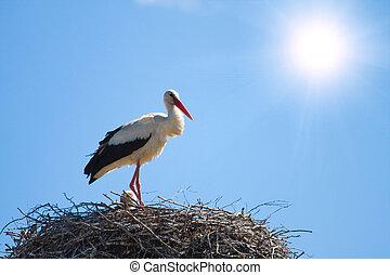 Storch in einem Nest, blauer Himmel mit Sonne im Hintergrund