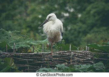 Storch in einem Nest in grüner Natur.