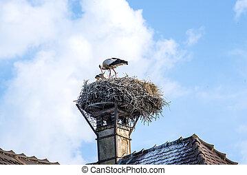 Storch in einem Nest.