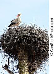 Storch in einem Nest