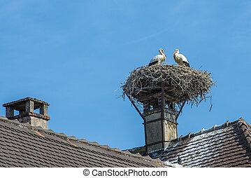 Strumpfhosen in einem Nest.