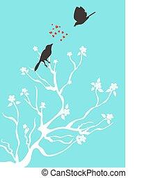 talk, lieben vögel