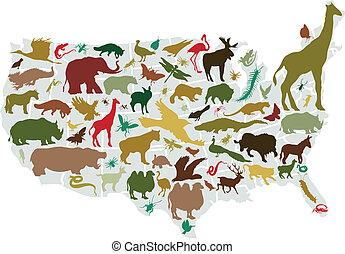Tiere Amerikas