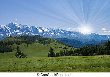 tierwelt, landschaftsbild, wiese, natur, altay, berge