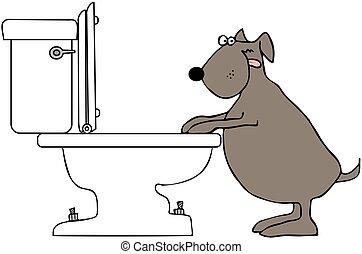 toilette, trinken, hund
