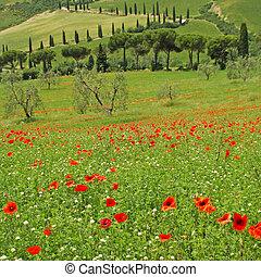 Toskana im Frühling,