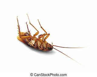 Tote Kakerlake isoliert