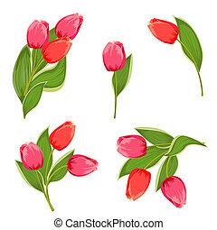 tulpen, fester entwurf, dein, sträuße