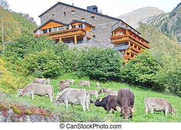 Typisches dunkles Ziegel-Andorra-Haus mit Weiden Kühen.