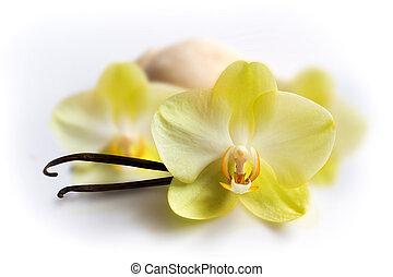 Vanille bleibt bei Blumen und Eis.