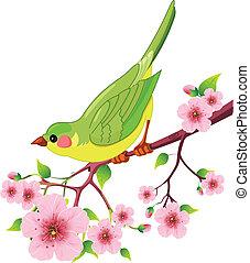 vogel, fruehjahr