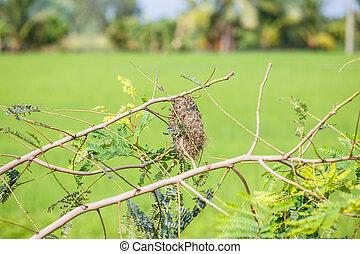 Vogelnest auf einem Baum.
