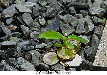 wachsen, geldbetrieb, geldmünzen, neu