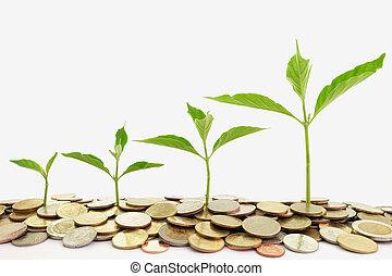 wachsen, geldbetrieb, start
