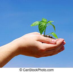 wachsen, pflanze, grün