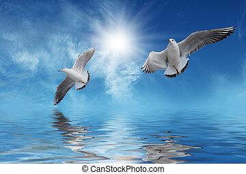Weiße Vögel fliegen zur Sonne