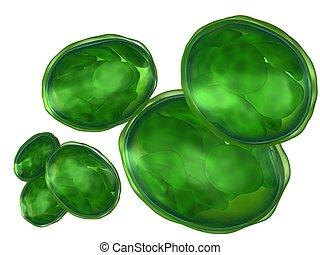 weißes, chloroplasts, freigestellt