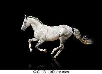Weißes Pferd isoliert