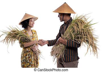 weibliche hand, reis, korn, während, besitz, schüttelnd, landwirt, mann