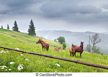weide, pferden, berge, hölzern, fohlen, fog., zaun, berg, ukraine, grasing, carpathians.