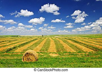 Weizenfarm bei der Ernte