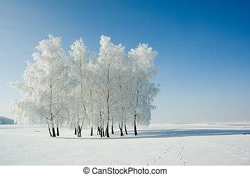 Winterlandschaft und Bäume