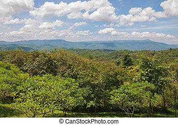 Wunderschöne grüne Berglandschaft mit Bäumen