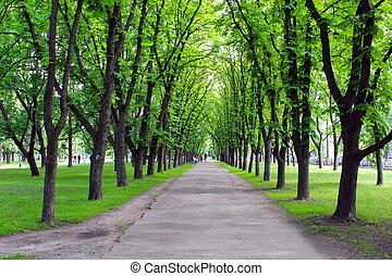 Wunderschöner Park mit vielen grünen Bäumen.