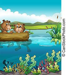 Zwei Biber spielen im See