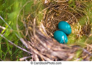 Zwei blaue Eier im Nest.