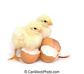 Zwei kleine Mädchen und gebrochene braune Eier